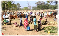 Land Grabbing, le terre rubate all'Africa