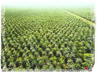 Land Grabbing, anche la Nigeria nella morsa della Monsanto