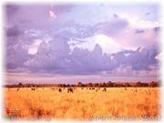 Central Kalahari Game Reserve, antica terra dei Boscimani