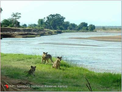 5 Giugno .. Giornata Mondiale dell'Ambiente